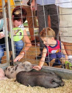 boy w potbelly pigs
